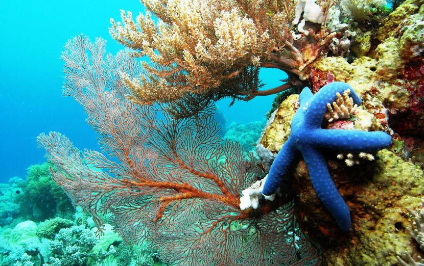 karang atoll